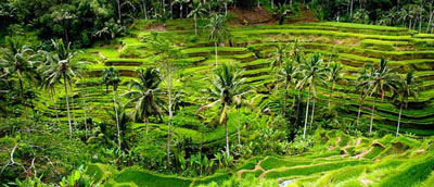 tegalalang rice terace ubud bali indonesia